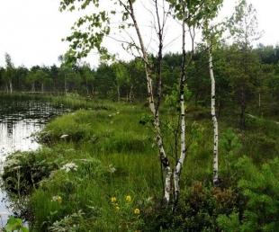 Objekta detalizēta meklēšana :: : Teirumnieku Swamp Trail