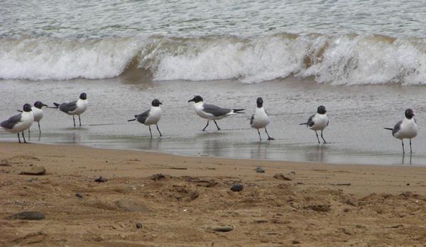 putnu sugas