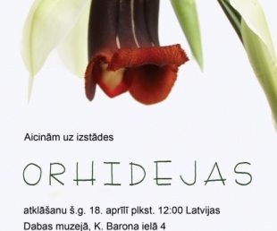 """Izstāde """"Orhidejas"""" Latvijas Dabas muzejā(ARHĪVS)"""