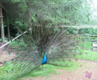 """Eksotisko putnu mini zoodārzs """"Viesturi"""""""