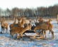 Pie Igaunijas robežas. VALKAS NOVADS