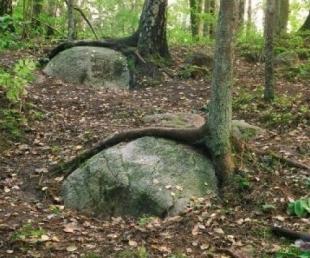Pokaiņu mežs