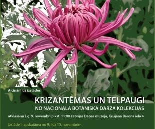 """Izstāde """"Krizantēmas un telpaugi no Nacionālā Botāniskā dārza kolekcijas""""(ARHĪVS)"""