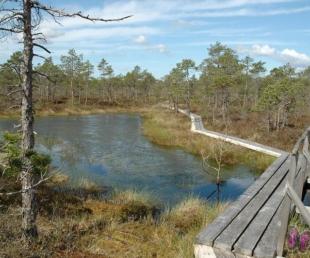 Teiču un Krustkalnu dabas rezervāti
