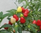 """Izstāde """"Dārzs. Flora 2012"""" Ķīpsalā – ikvienam ar """"zaļajiem īkšķīšiem""""(ARHĪVS)"""