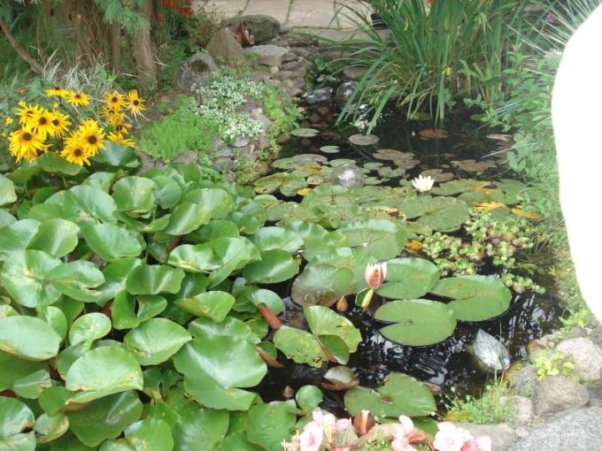 Māras dārzs Aucē