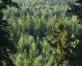 Šlīteres zilo kalnu Kusperlandes grava