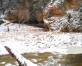 Cecīļu dabas taka