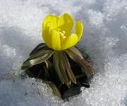 Pavasara gaidīšanas tirgus Ventspilī(ARHĪVS)