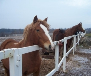"Zirgu sēta ""Untumi"""