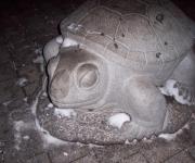 Bruņurupucis