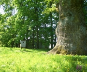 Sējas muižas parks un dižozols