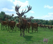 Safari parks Zemitāni