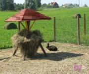 Zemnieku saimniecība Guntiņi