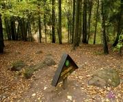 Rudens saulgrieži Pokaiņu mežā un Tērvetē(ARHĪVS)